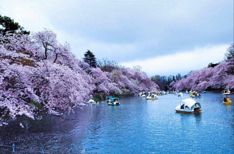 Inokashira parkı