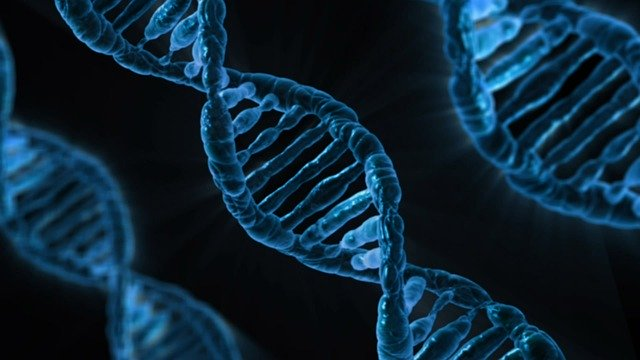 moleküler biyoloji ve genetik bölümü dersleri